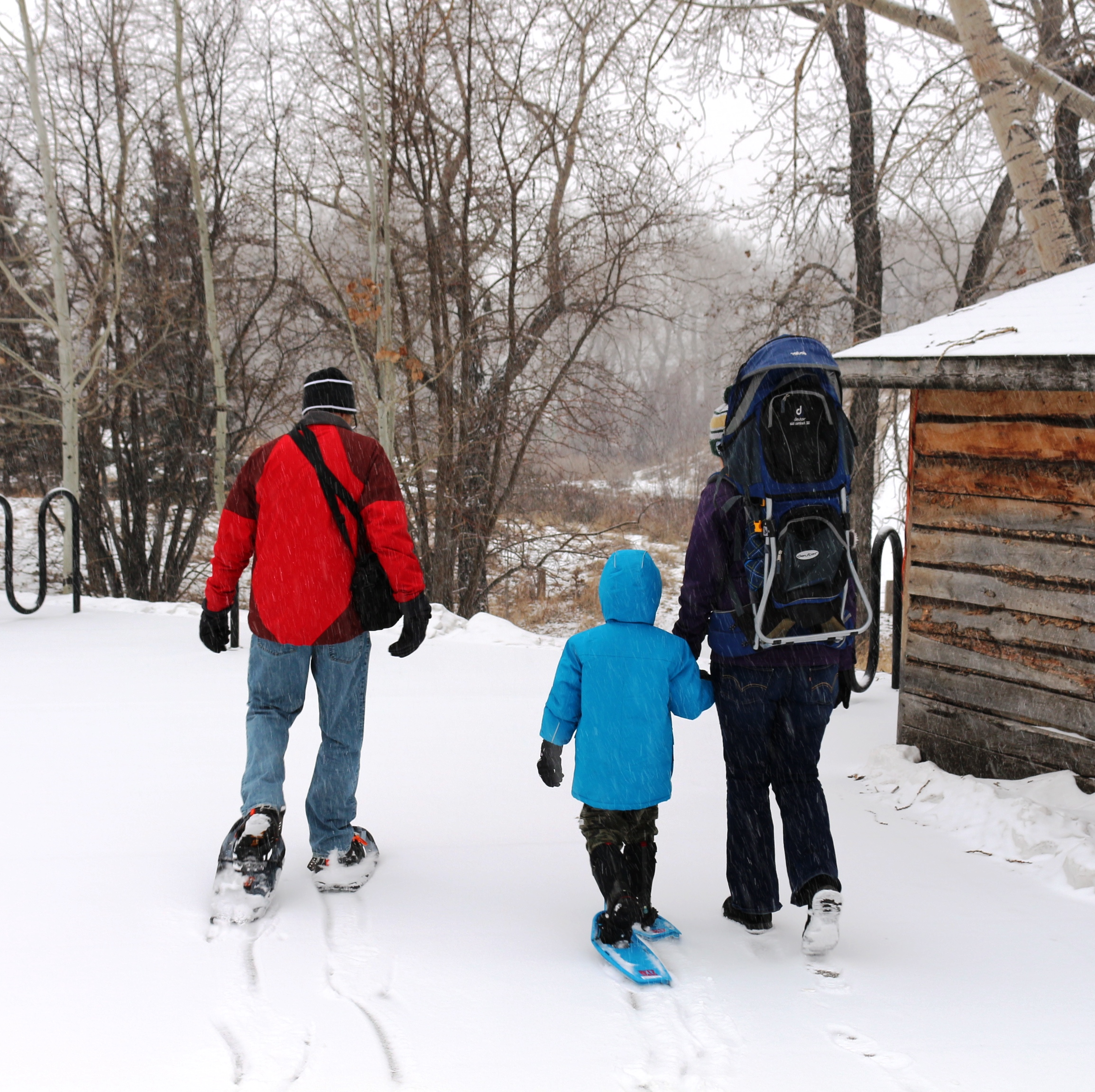 Family walks together through the snow on snowshoes
